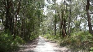 Rail Trail 007